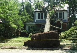 Irene damage on Bellevue Avenue