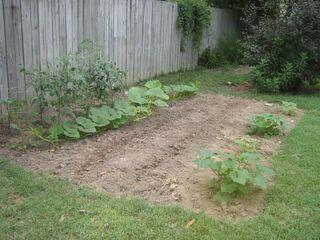 23 June 2011 Garden